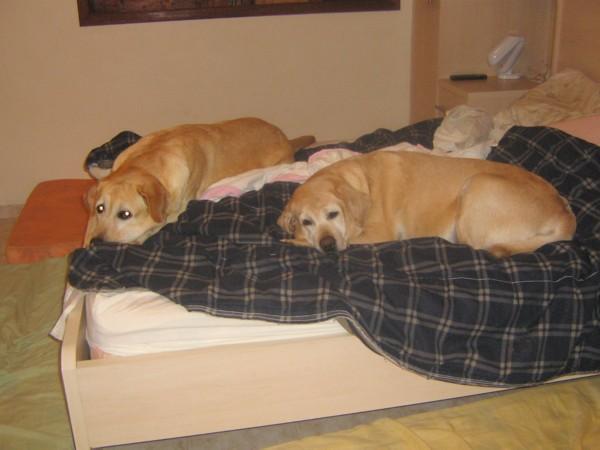 Aonde eu vou dormir?????????? É a pergunta da Ana Braga, a amorosa dona de Gabi e Brenda