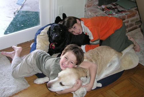 Nossos cães americanos Prop: Alex Capeto