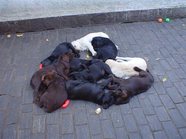 Uma soneca...  Prop: Canil Tokay